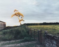 Self Portrait as a Tree