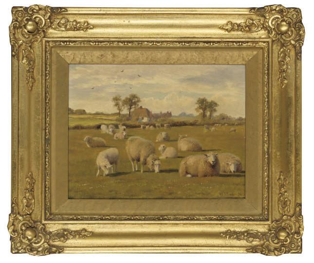 Sheep in a field