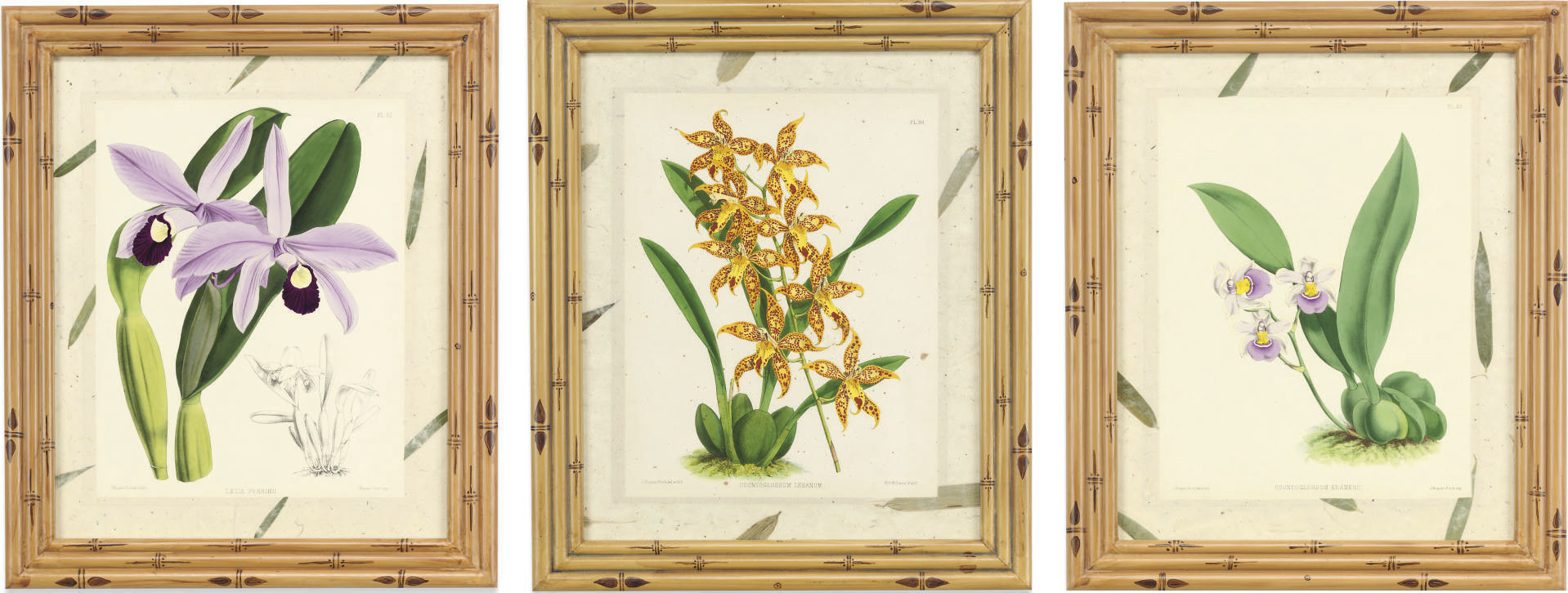 A SET OF TWELVE COLOURED LITHOGRAPHS OF ORCHIDS