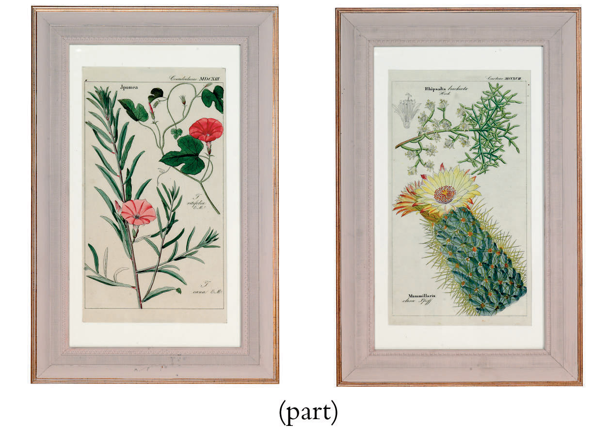 A SET OF TEN HAND COLOURED ENGRAVINGS PROBABLY FROM 'FLORA UNIVERSALIS'