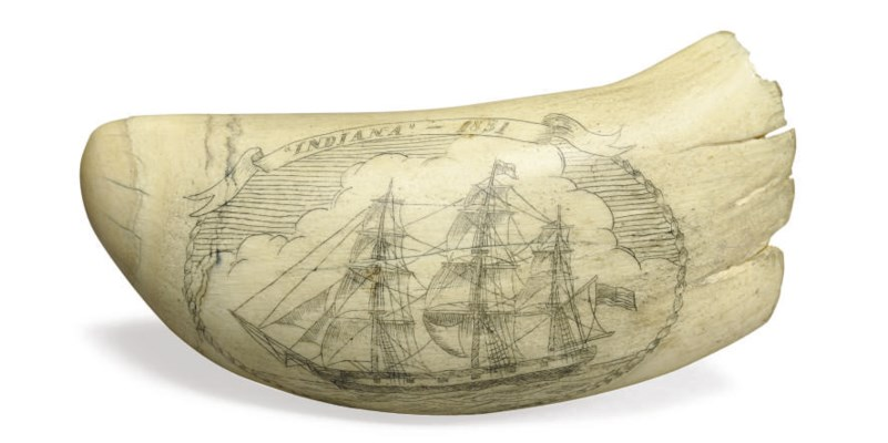 A scrimshaw whale's tooth with