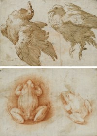 Two studies of a dove (recto); Two studies of a frog (verso)