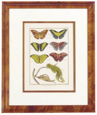 [Butterflies]: Six Plates