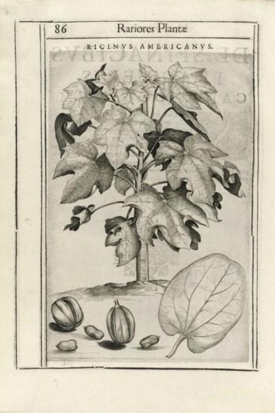 ALDINI, Tobia (17th century) a