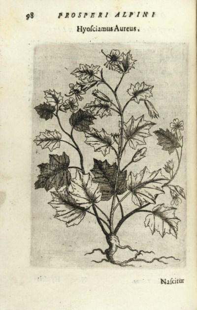ALPINUS, Prosper. De Plantis E