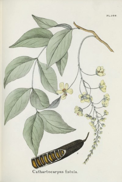 ANSLIJN, Nicholas (1777-1838).