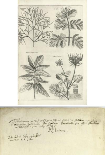 MORISON, Robert (1620-1683). P