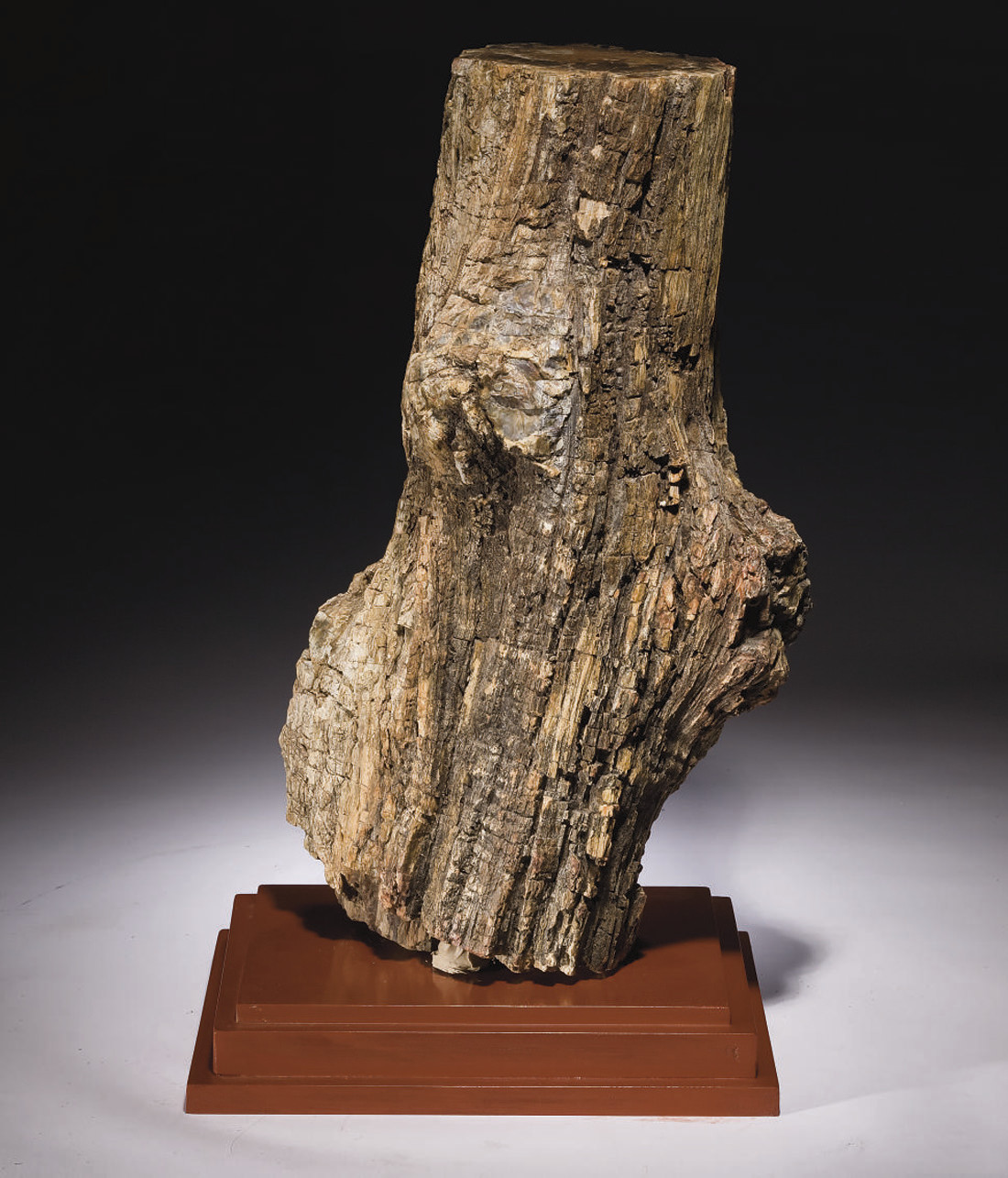 TRONC FOSSILE