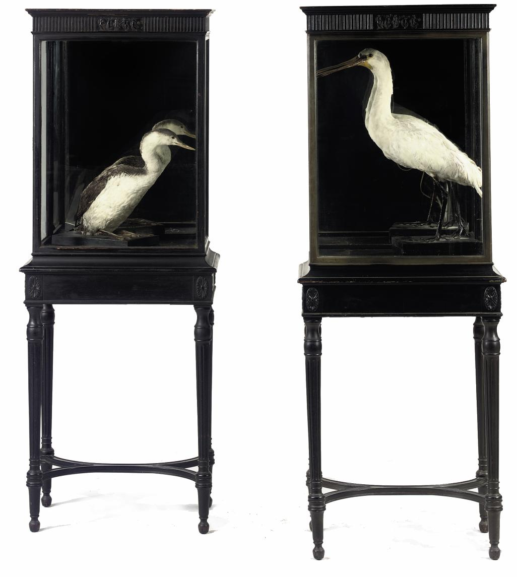 A PAIR OF BLACK-PAINTED DISPLAY CASES
