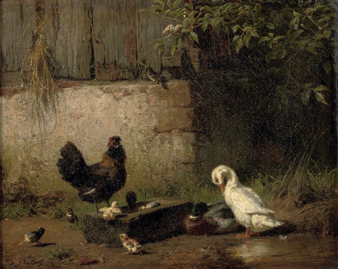 Poultry in the farmyard