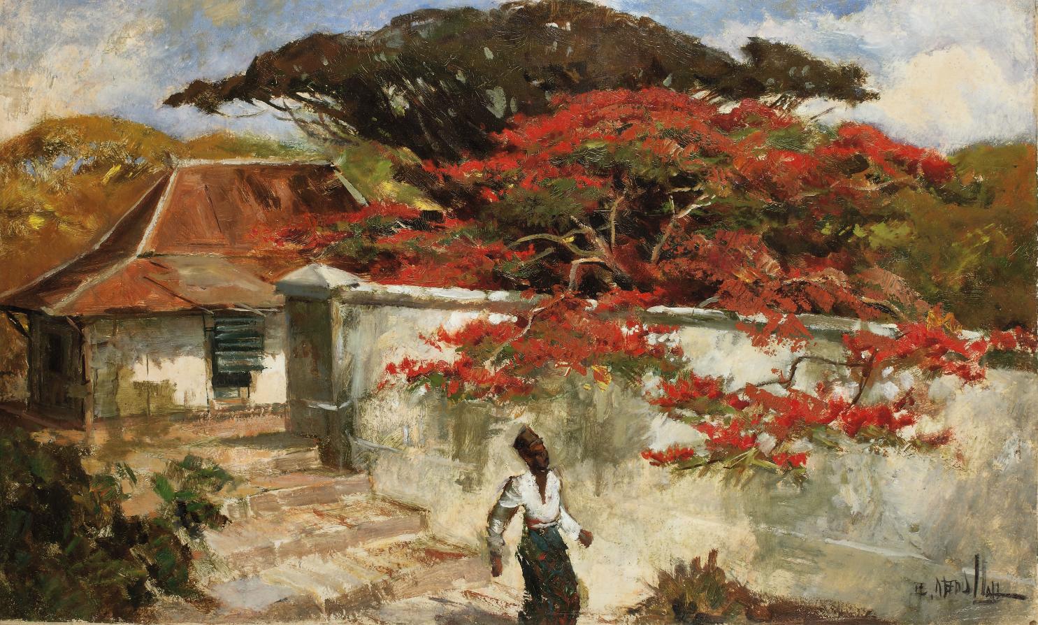 A man under a flamboyant tree