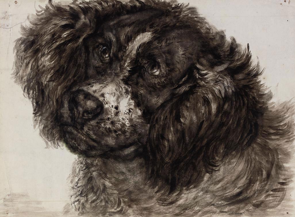 Study of a Dutch Partridge dog