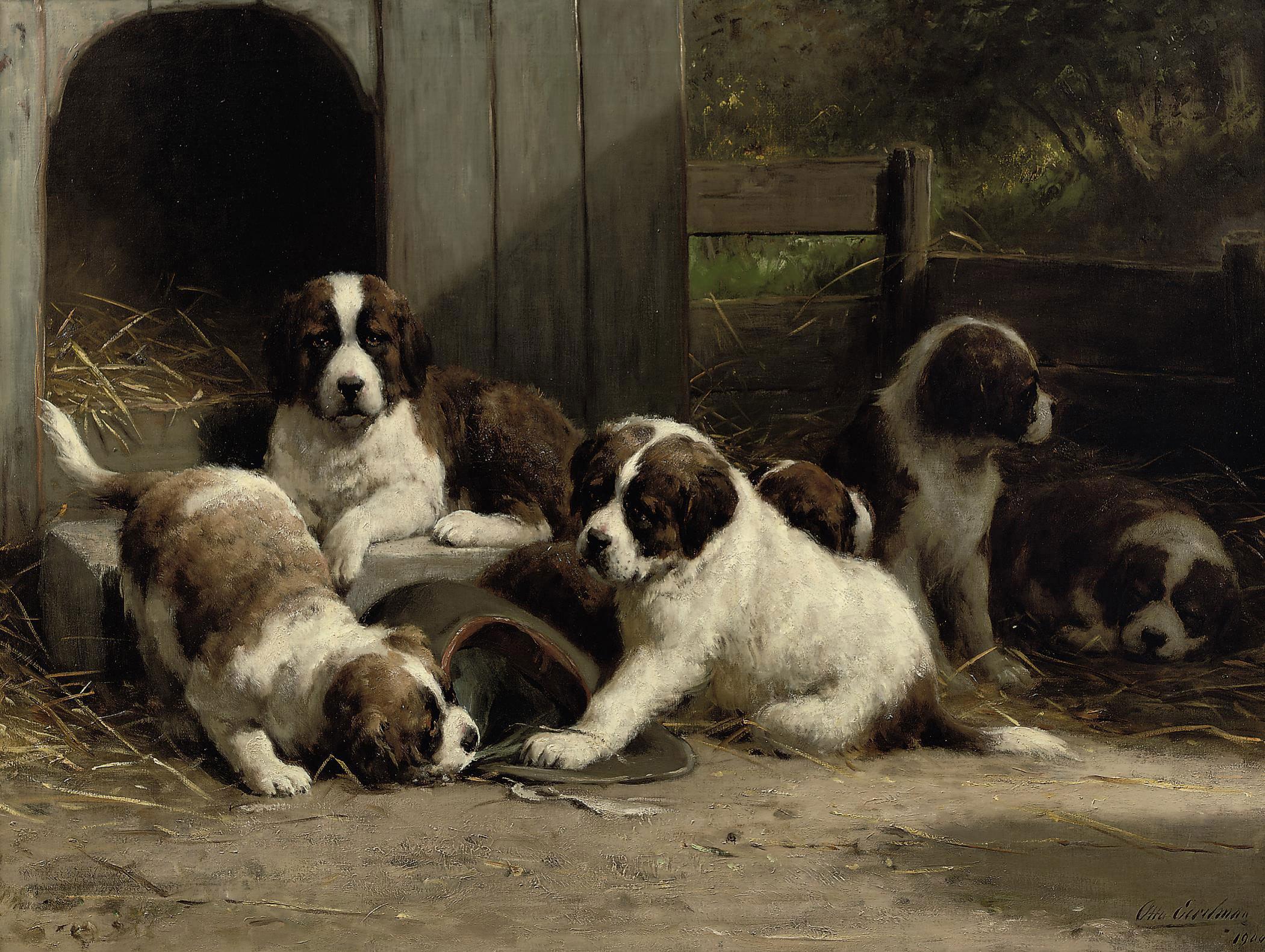 Saint-Bernard puppies