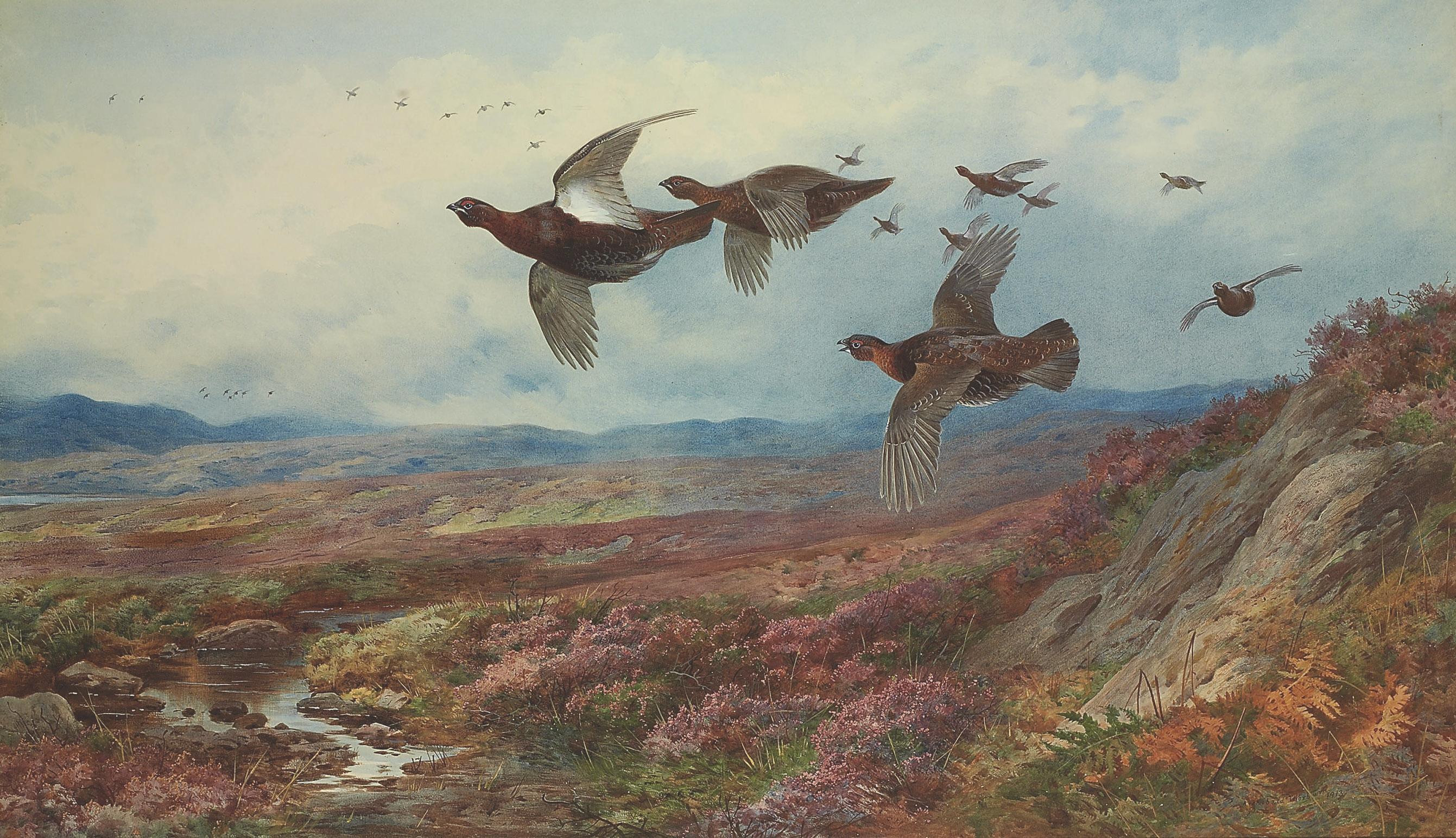Grouse in flight
