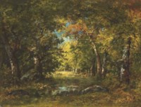 Grande forêt, sous-bois
