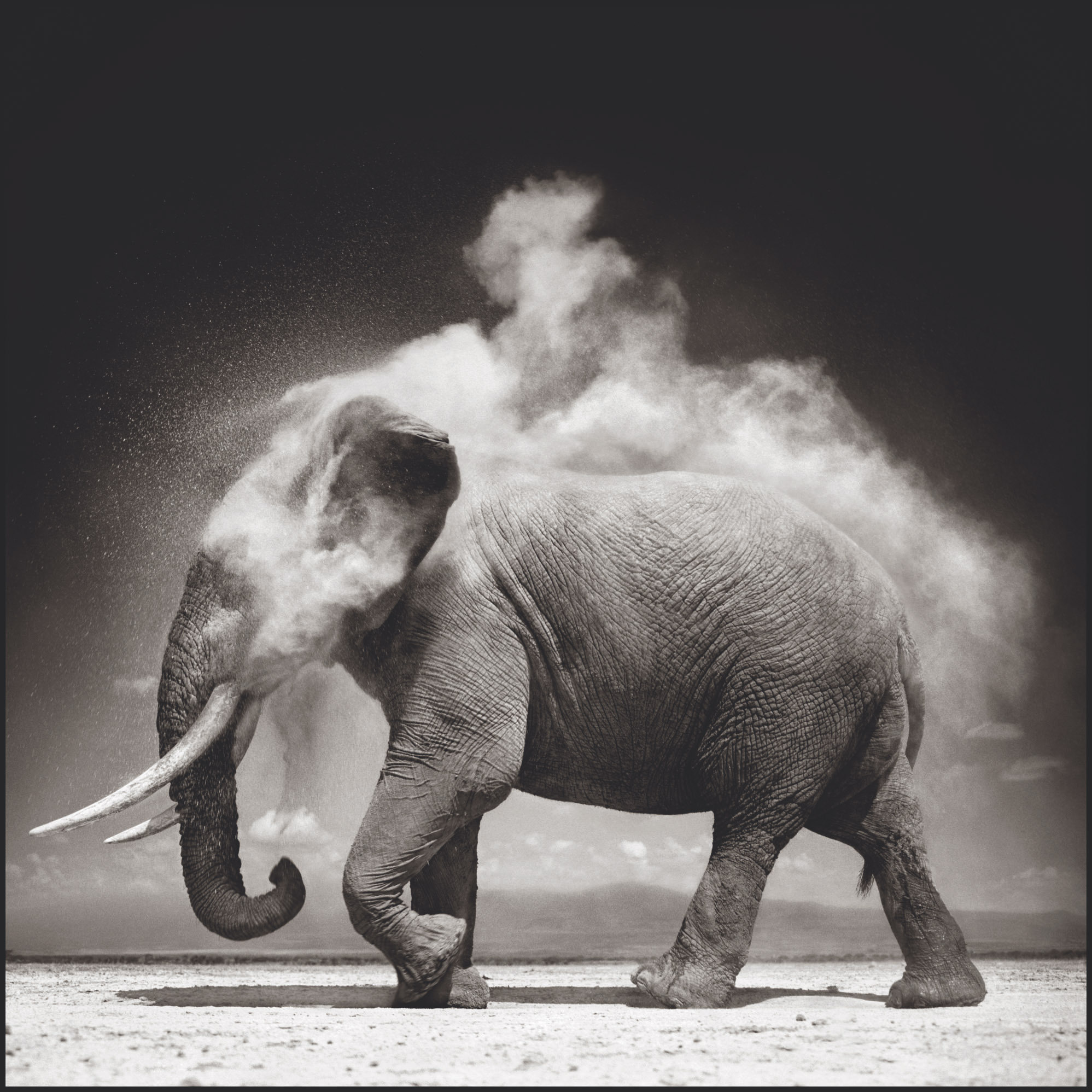 Elephant With Exploding Dust, 2004