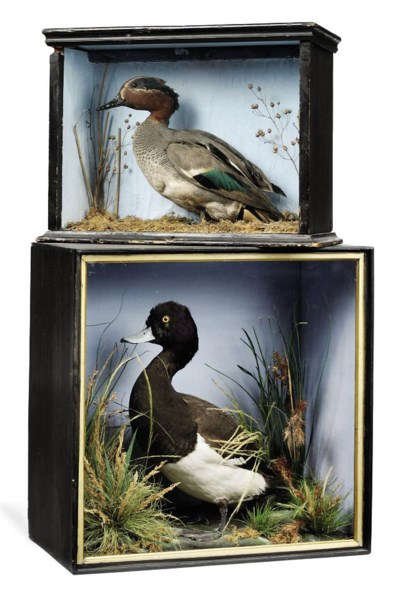TWO VICTORIAN CASED DISPLAYS O