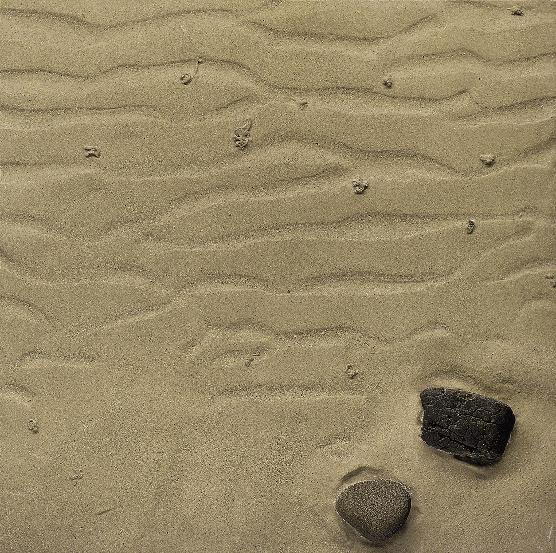 Study of Rippled Sand and Rocks with Worm Casts, Hebrides
