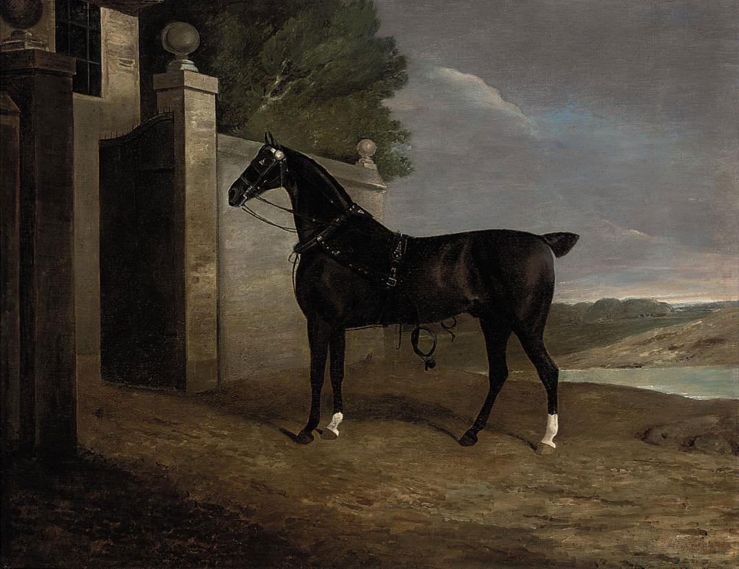 A carriage horse at the stable gates