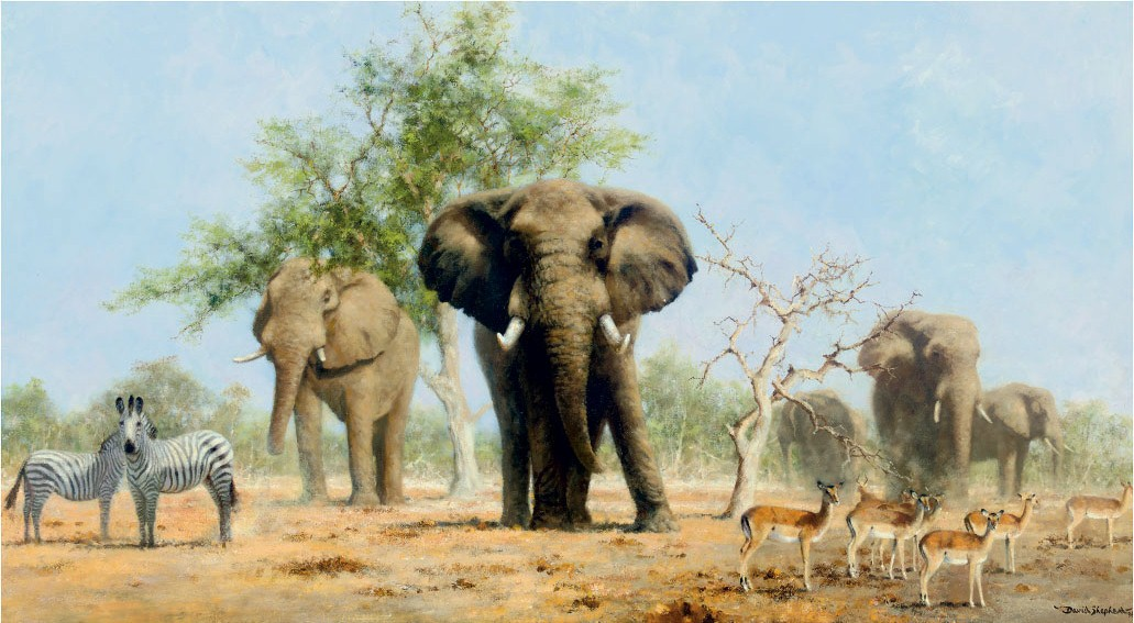 The approach to the waterhole