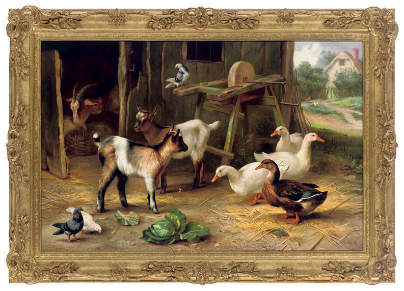 Goats, ducks and pigeons near a barn door