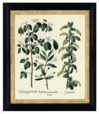 Xylosteon alterum Dodonei; Arbor ludae; Ariftolochia Vulgaris flore Purpureo; Amaranthus Tricolor; Asparagus domesticus; and Nymphaea alba maior