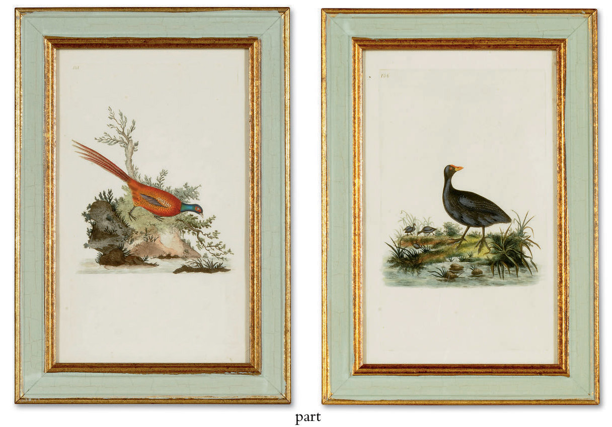 TWELVE HAND-COLOURED ENGRAVINGS OF BIRDS