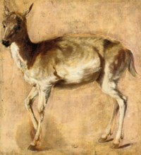 Study of a deer