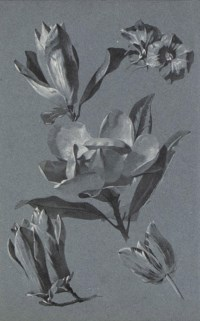 Studies of flowers, including roses, tulips, poppies and other varieties (one illustrated)