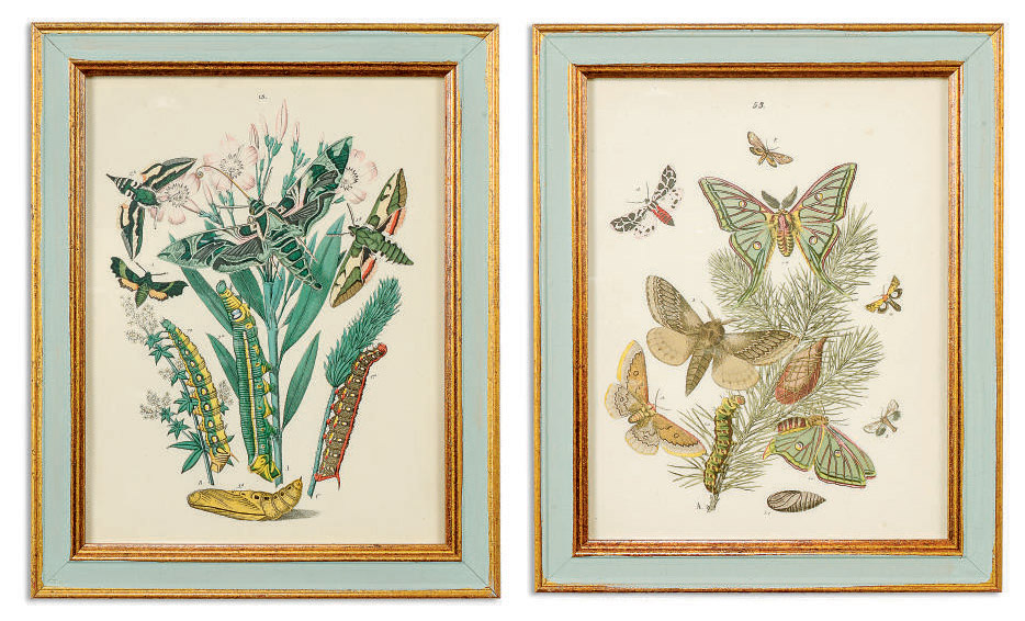TWELVE COLOURED LITHOGRAPHS OF BRITISH MOTHS AND BUTTERFLIES
