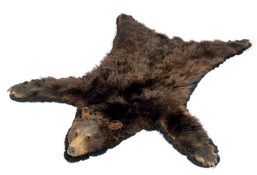 A TAXIDERMY MOUNTED BROWN BEAR SKIN RUG , MID-20TH CENTURY