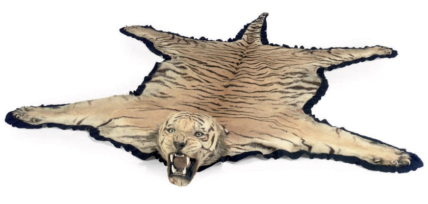 An Indian Taxidermy Tiger Skin