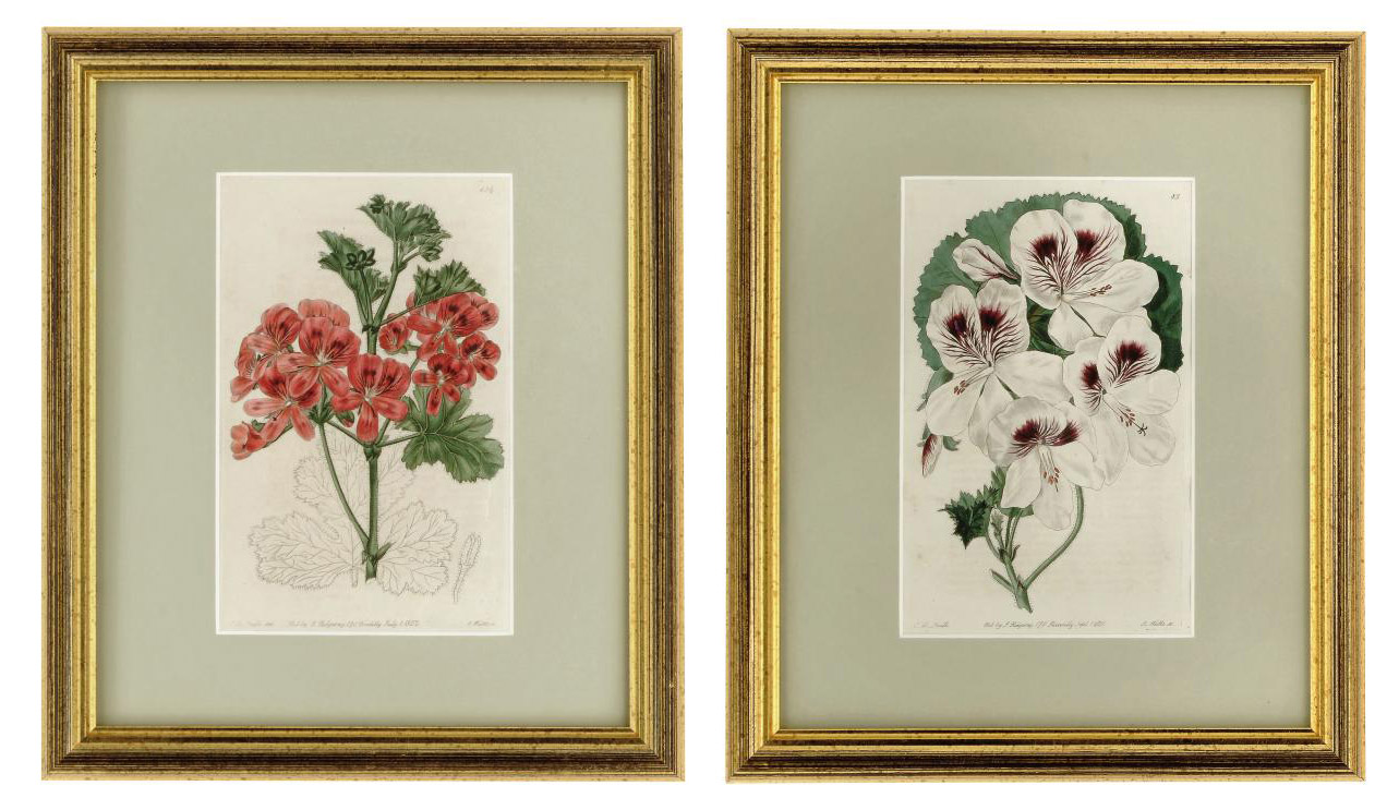 TEN COLOURED ENGRAVINGS FROM '