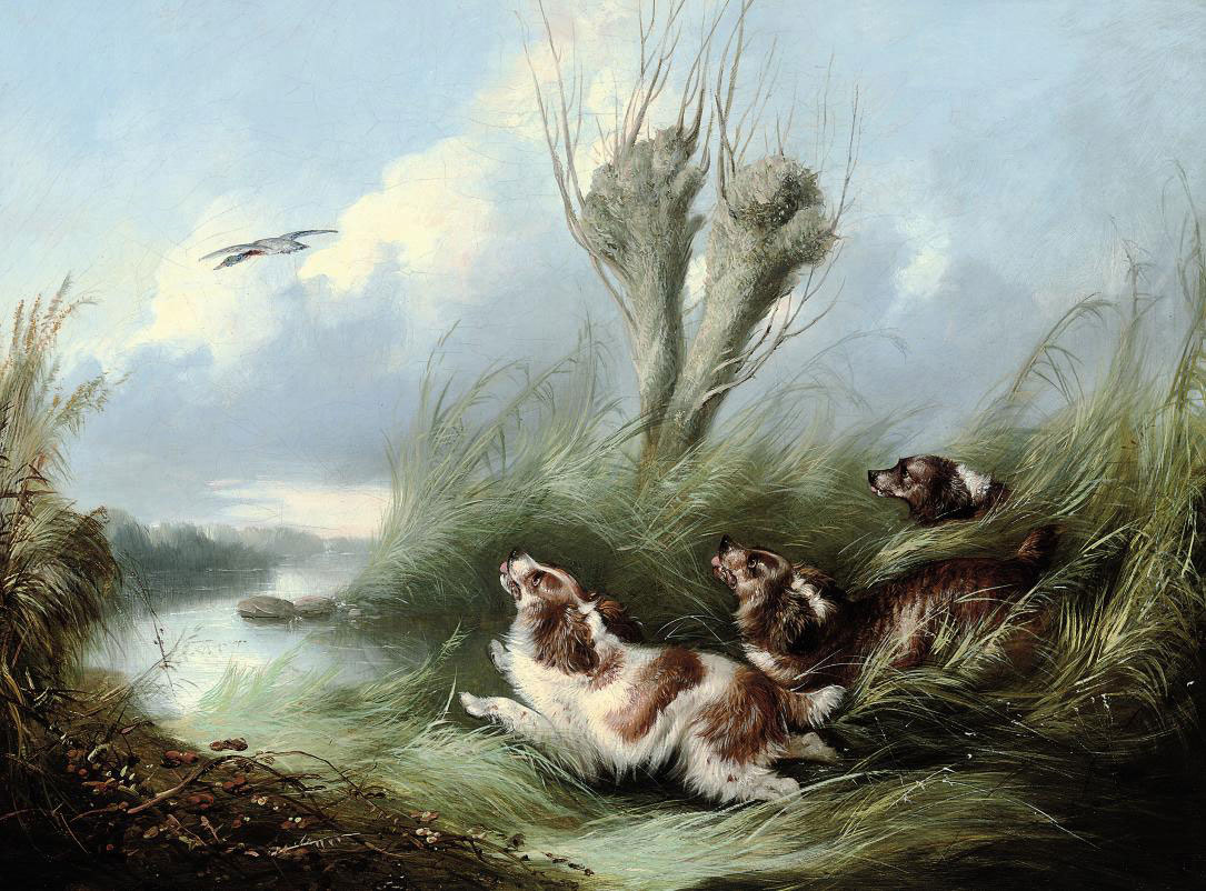 Spaniels chasing a mallard in flight
