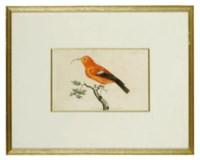 GEORGE SHAW (1751-1813) & FREDERICK POLYDORE NODDER (fl.1773-c.1801)