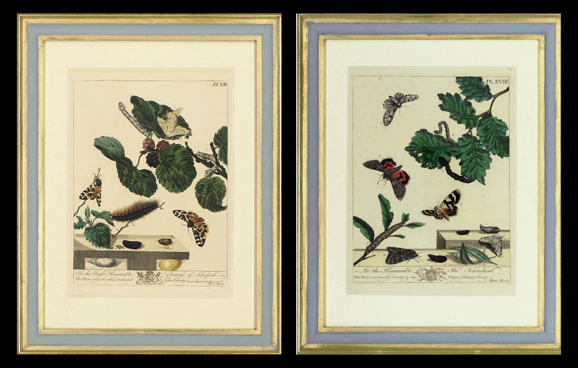 Studies of Insects, from The Aurelian. A Natural History of English Insects