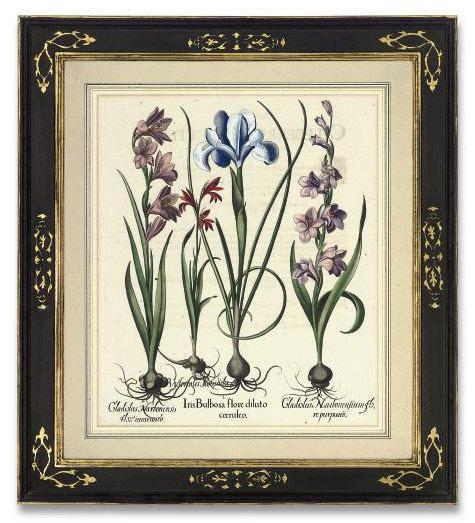 Iris Bulbosa flore diluto coeruleo; and Gladiolus Italicus flore rubro