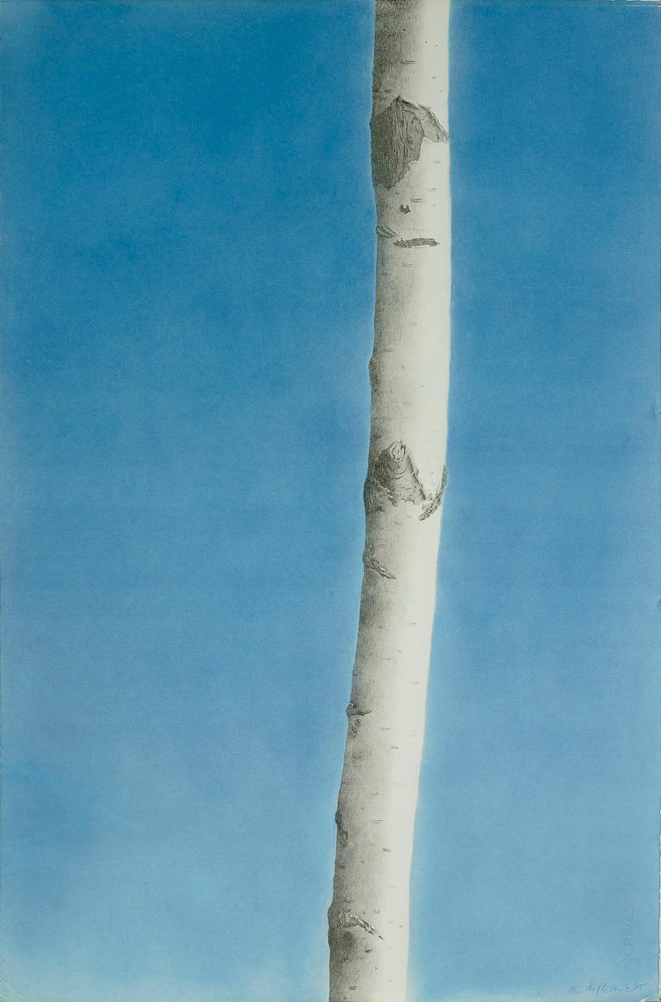 Baum, 14. Mai 1979