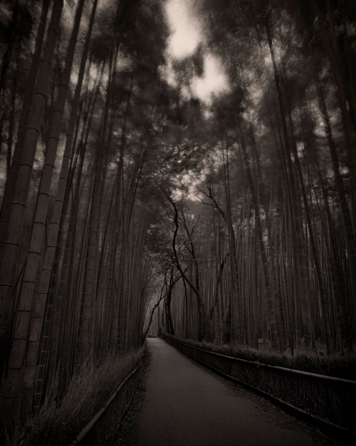 Kyoto Bamboo Path