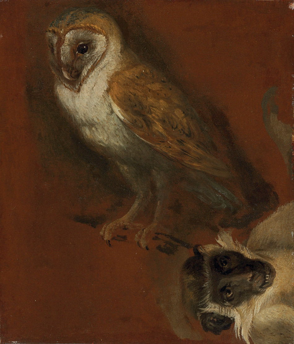 Study of an owl, with a fragmentary study of a monkey