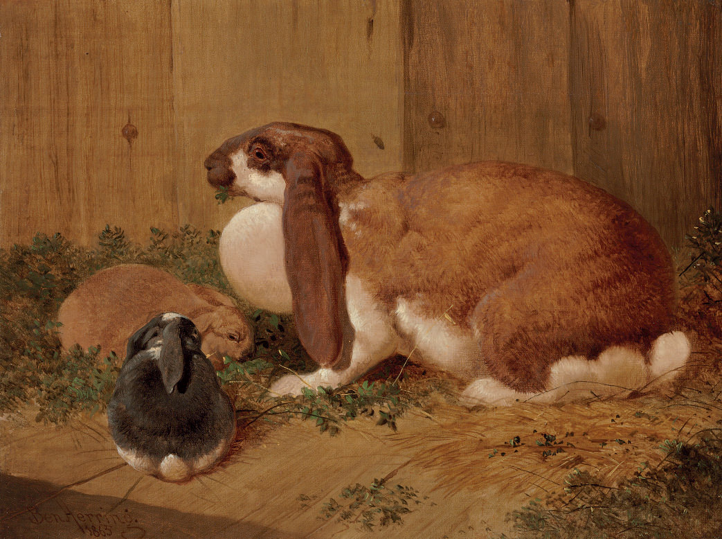 A Lop-Eared Doe Rabbit and her Young