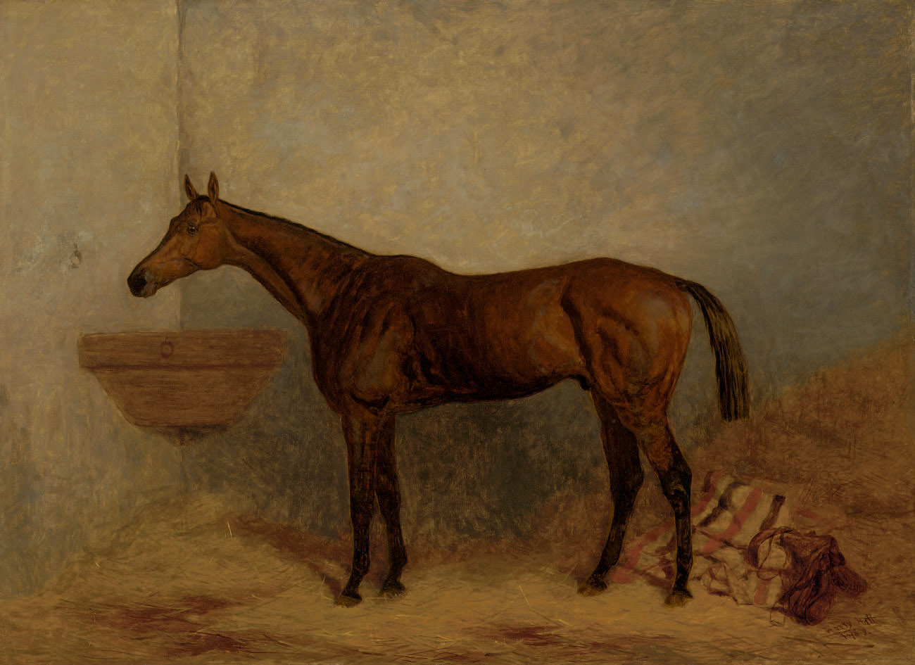 Isonomy, a bay colt in a stall