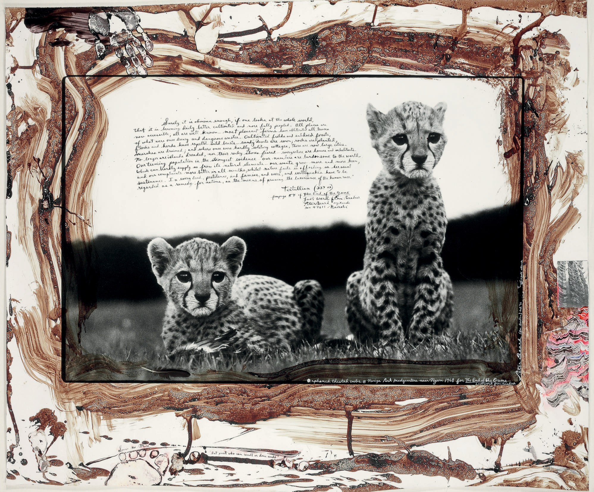 Orphaned Cheetah Cubs, from The End of the Game, 1968