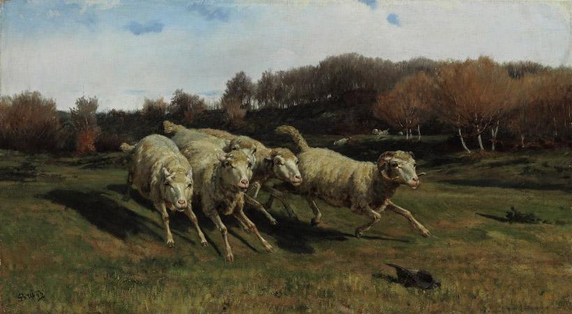 Fleeing sheep