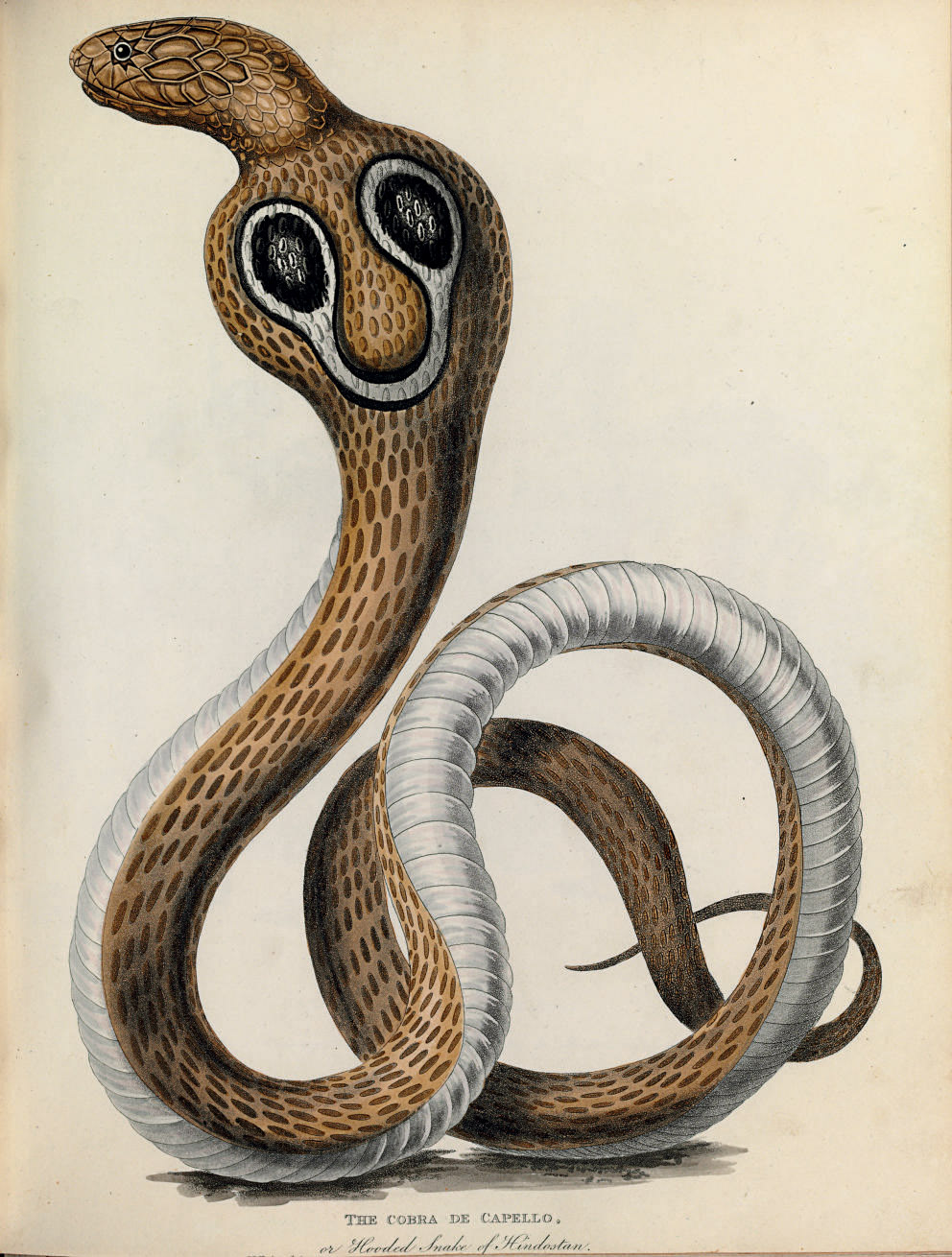 FORBES, James (1749-1819). Ori