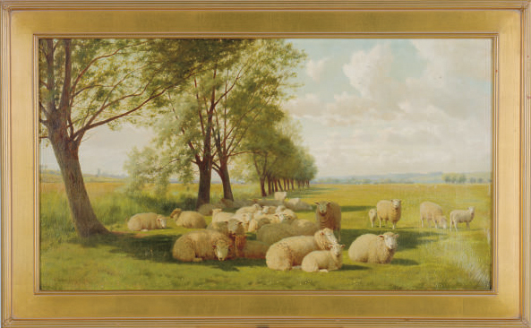 Sheep resting in a meadow