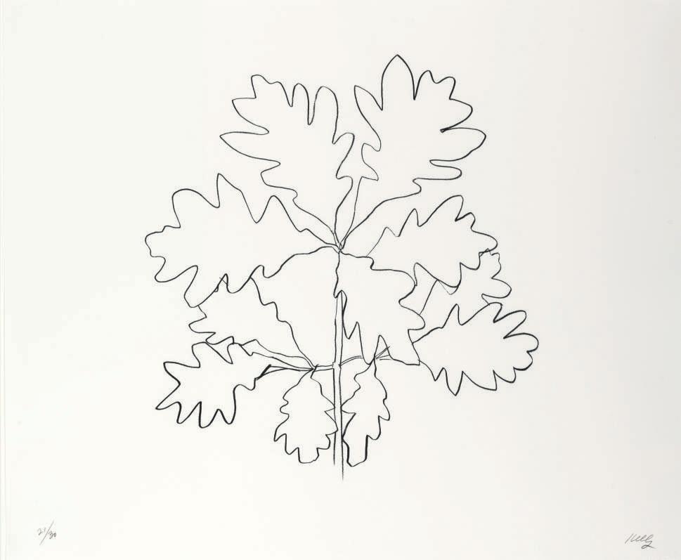 Ellsworth Kelly Oak Vi From Oak Leaves G 1570 1990s