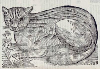 ALDROVANDI, Ulisse (1522-1605)