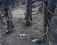 Woman and Dog in Forest, 1953