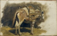 Study of a donkey